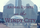 Animal Rights in the Windy City
