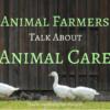 Animal Farmers Talk About Animal Care